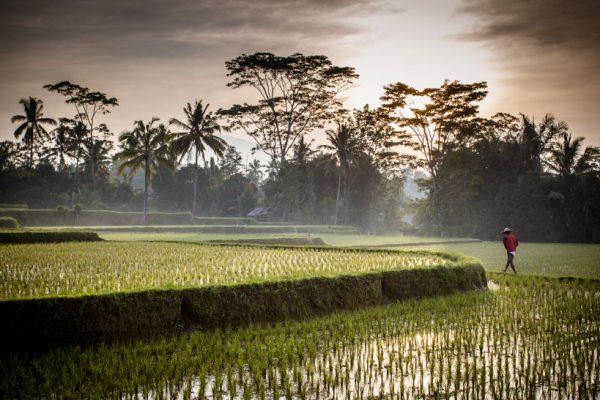 Kunst en erotiek op Bali